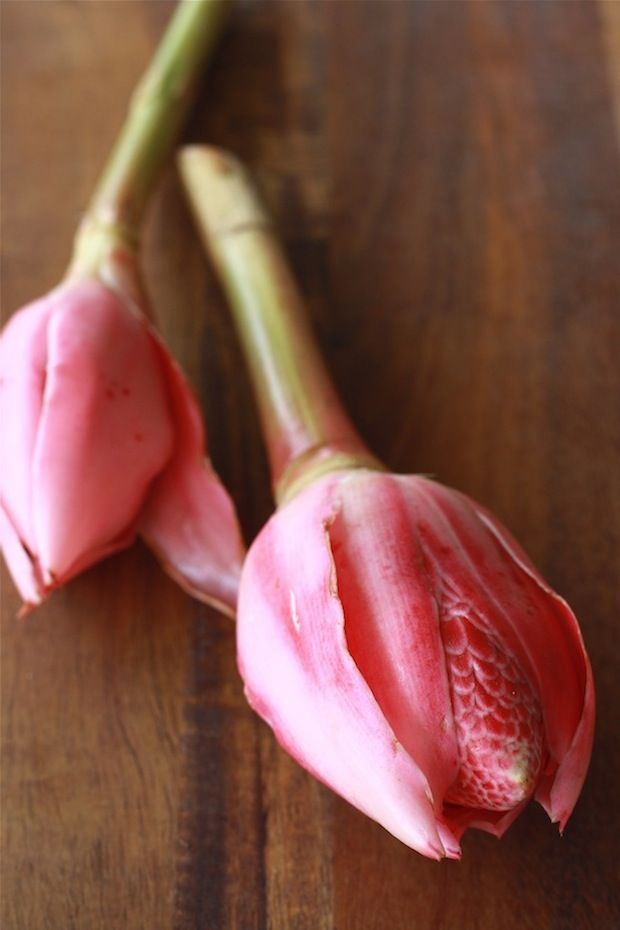 What is Torch Ginger Flower (Bunga Kantan) - learn more at SeasonWithSpice.com