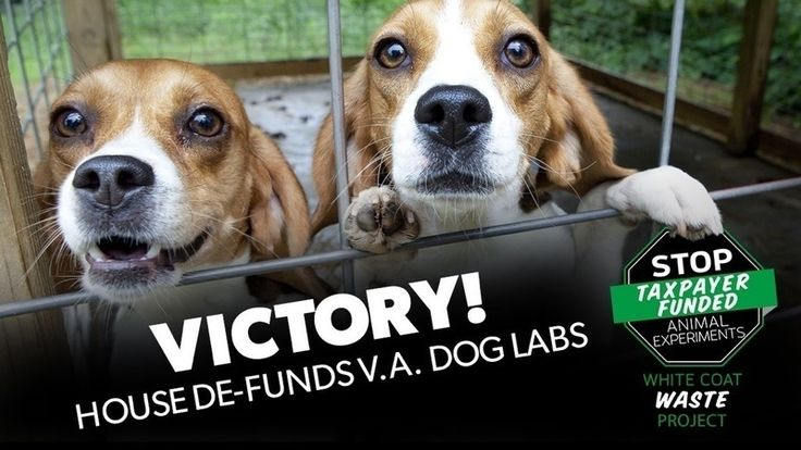 Petition update · VICTORY! House votes to DEFUND V.A. dog experiments · Change.org