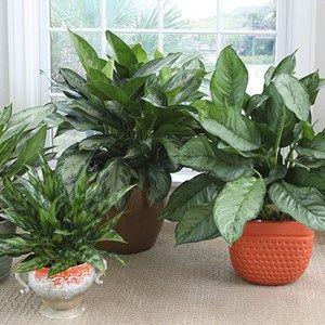 25 best best office plants ideas on pinterest - Hardy office plants ...