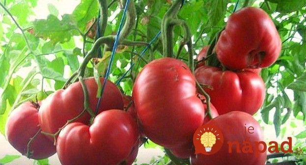 Tip záhradkárky pre každého, kto chce veľkú úrodu: Paradajky pestujem na tejto zmesi a v lete nestíham oberať!