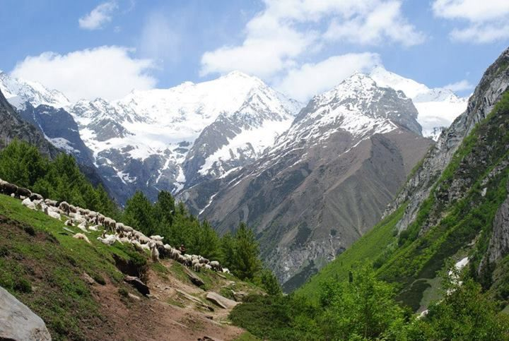 Gaddis are a semi-nomadic sheep hearding tribe of Himachal Pradesh.
