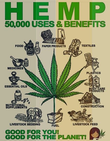 Yep, I don't know why we use oil, gas, and other unnecessary    materials. Hemp is good for our environment and it can be used for anything! But instead we are killing our earth using up all our resources.