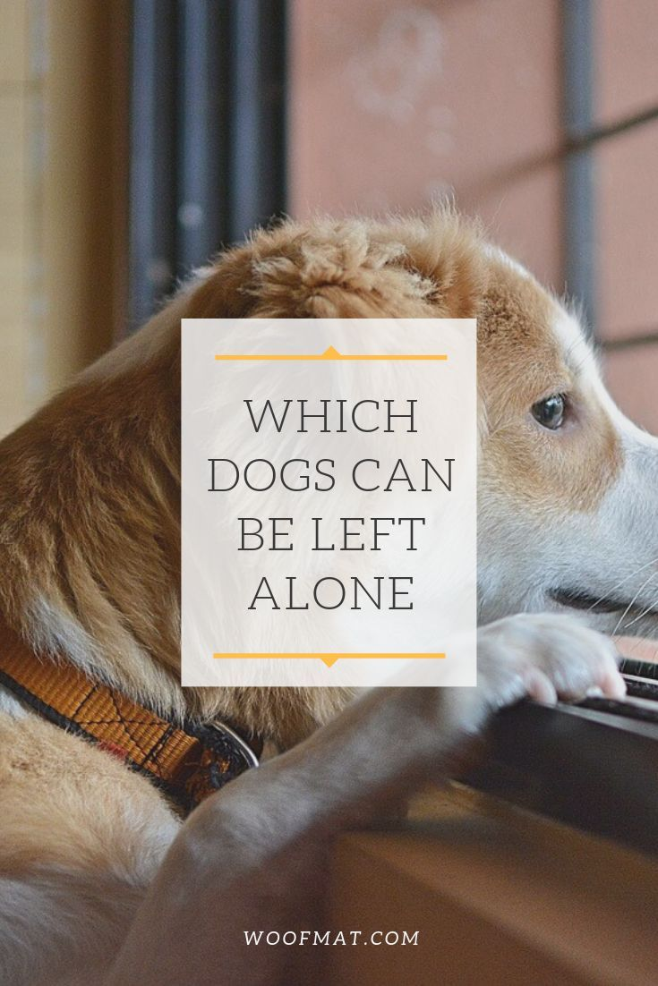 Which Dogs Can Be Left Alone Low Energy Dogs Apartment Dogs Breeds Apartment Dogs