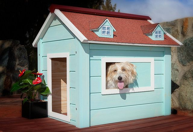 Phoebe enjoys the view from her RitzPetz dog house