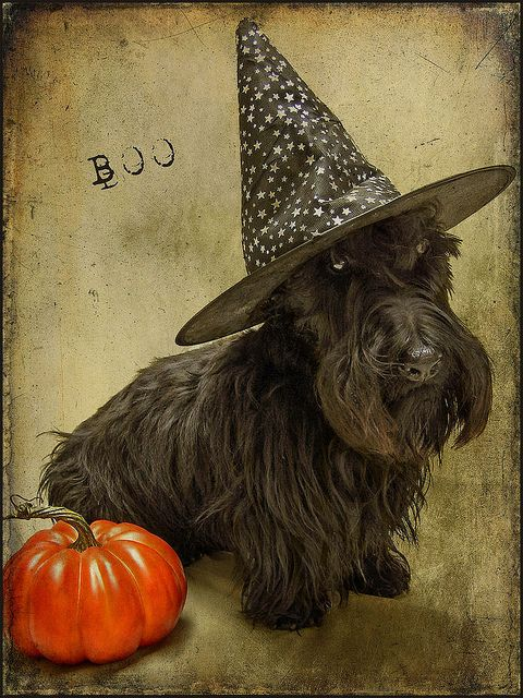 Halloween Scottish Terrier
