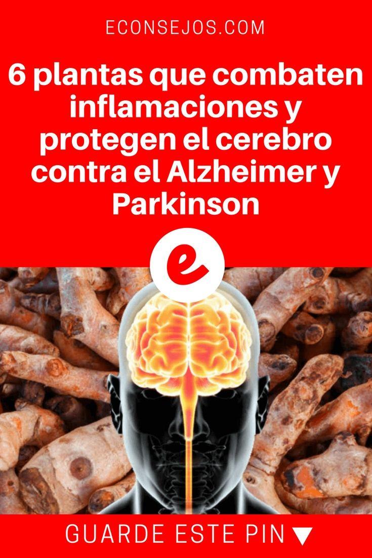 Parkinson español | 6 plantas que combaten inflamaciones y protegen el cerebro contra el Alzheimer y Parkinson | Usted las conoce, pero no sabía que ellas podían hacer esto. Lea y sepa todo aquí.