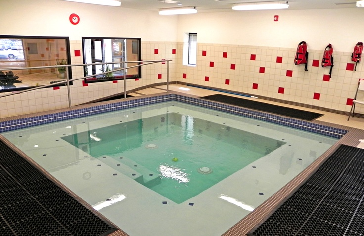 Indoor Dog Swimming Pool At The Red Dog Pet Resort Boston Animal Hospital In Boston Ma