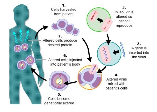 Basic Process Of Gene Therapy