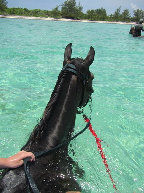 Ahh bucket list for sure... Swimming with my horse in crystal clear waters