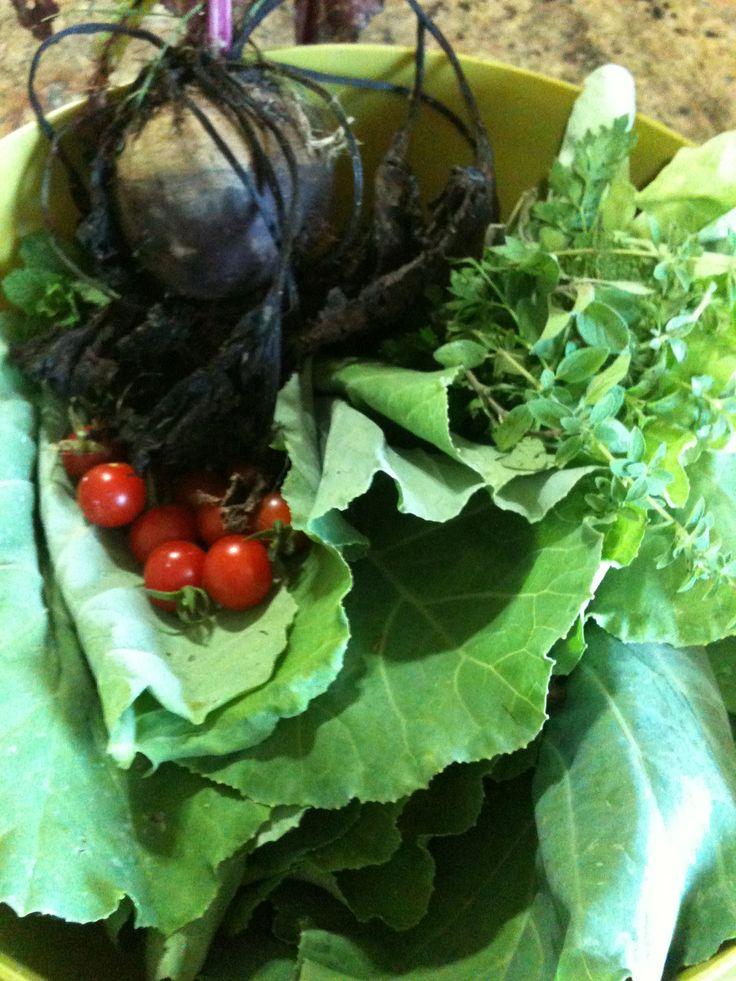 Diretamente da nossa horta para a mesa do nosso almoço. Eat clean Organic Diy Herb Garden Home