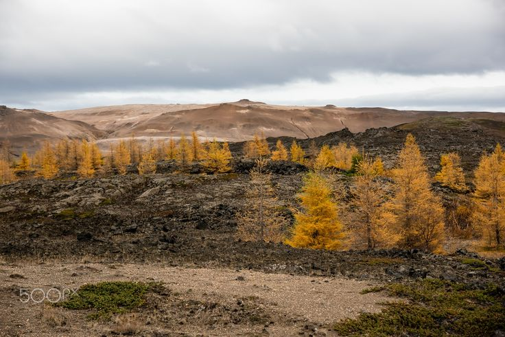 autumnimpression - nordic landscape in autumn near the myvatnlake in the north of iceland.