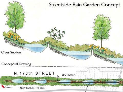 Rain Garden Design rain garden with purple coneflower Street Side Rain Garden Concept