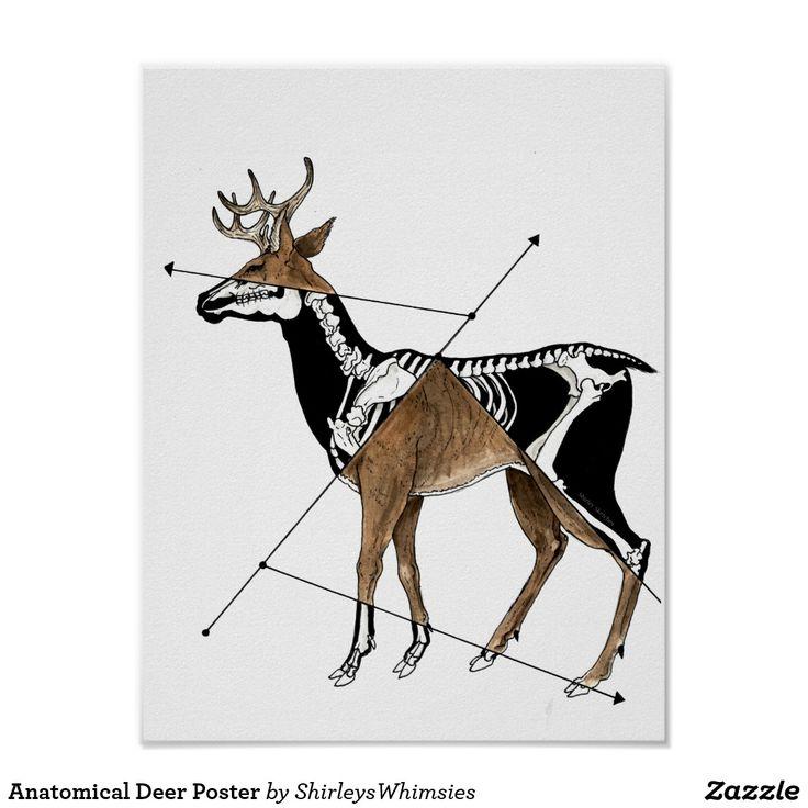 Anatomical Deer Póster