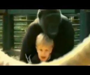 Toddler Plays With 300 Pound Gorilla