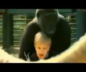 Toddler Plays With 300 Pound Gorilla