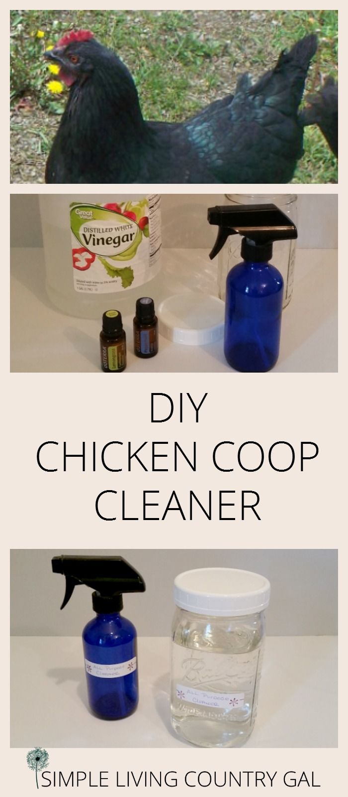 Use this simple natural and effective cleaner for your chicken coop. Spray on all surfaces to disinfect and deter pests. via @SLcountrygal