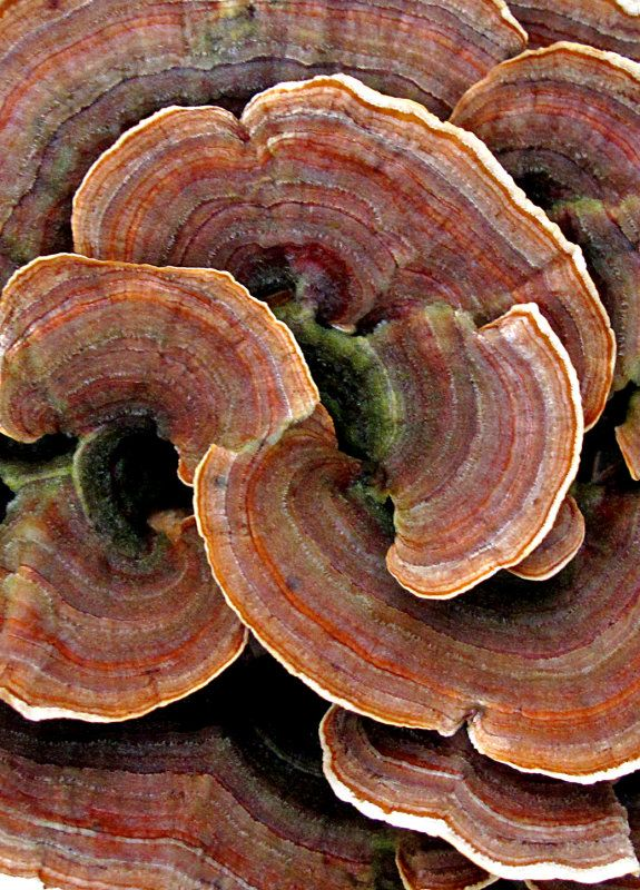 Fungi by Warren Krupsaw