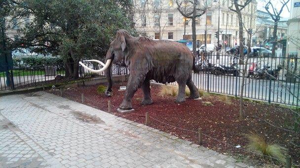 Ohoh.. mi é sembrato di vedere un mammut..!!??!!??