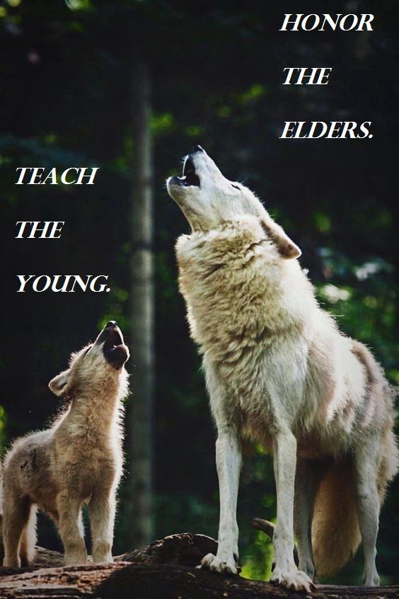 The Way Of The Pack Baby Wolves Wolf Love Wild Dogs
