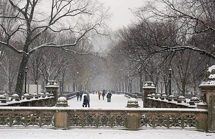 Cold in Central Park