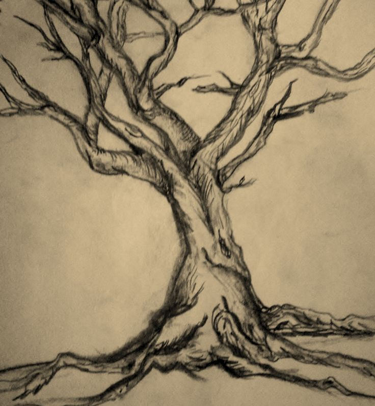 pencil tree drawing pencil sketch drawing