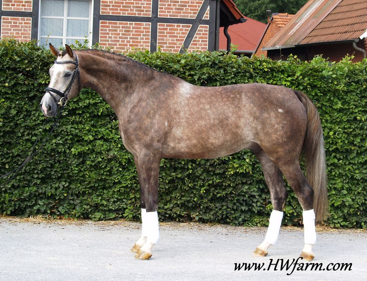 Best 25+ Dressage horses for sale ideas on Pinterest Pretty - horse sales contracts