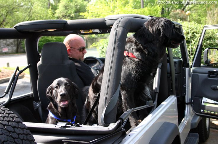 Jeeps + dogs = too awesome for words :-)