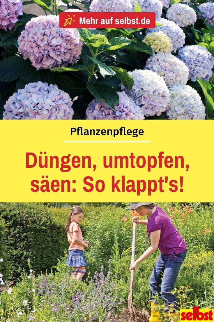 Pflanzenpflege Selbst De Pflanzen Pflanzen Umtopfen Garten Pflanzen