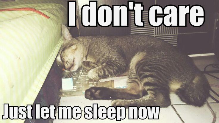 My cat sleeping like tired cat