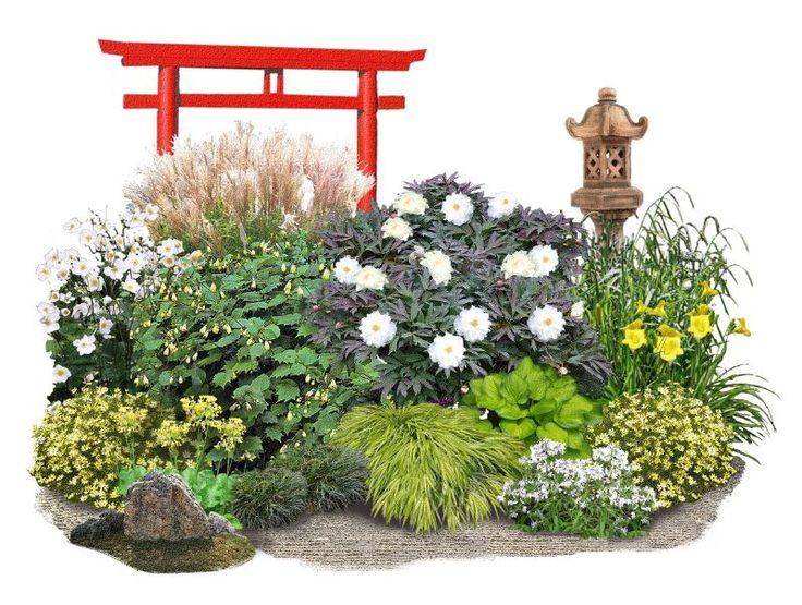 Die Anmut Japans verkörpert die prächtige Strauchpfingstrose in edlem Weiß. Sie bildet den Höhepunkt und das Zentrum dieser auch für den halbschattigen Gartenbereich geeigneten Bepflanzung. Dezentes grüngelbes Blattwerk von Funkie...