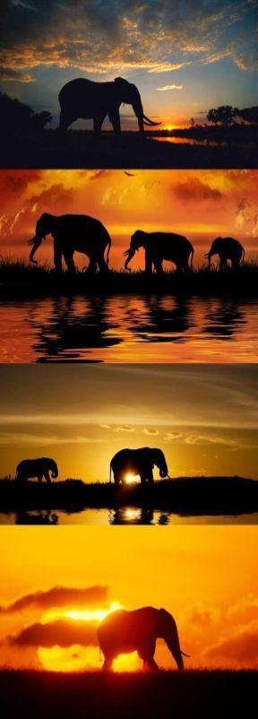 Elefantenfotografie 36   – Elephants ever seen pics