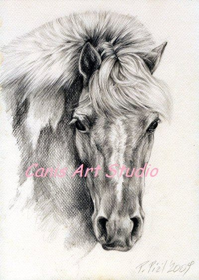 CUSTOM HORSE PORTRAIT Equestrian Art Graphite by CanisArtStudio
