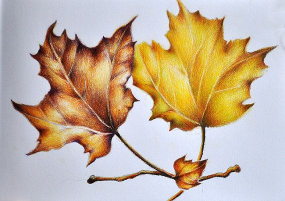 Original Colored Pencil Drawing, Realist Botanical Leaves Drawing, Autumn Leaf Art,  Autumn Drawing 5.5x8 inch