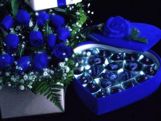9 best blue roses images on pinterest | aussies, beautiful and colours, Ideas