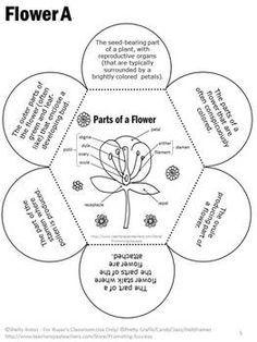 PARTS OF A FLOWER VOCABULARY INTERACTIVE NOTEBOOK ACTIVITY PLUS QUIZ - TeachersPayTeachers.com