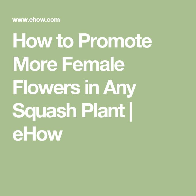 How to Promote More Female Flowers in Any Squash Plant   eHow