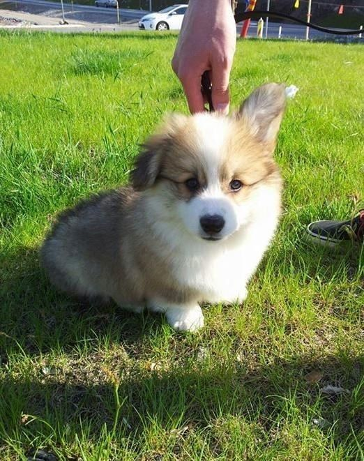 So. | 19 Dogs Who Are Actual Fuzz Buckets