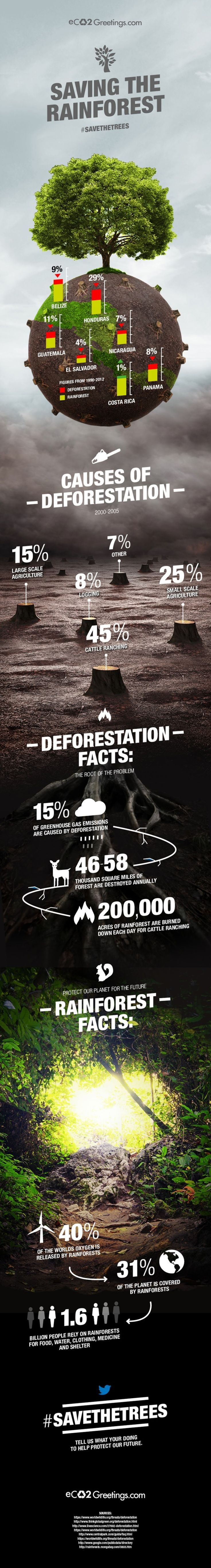 This image shows the main causes of deforestation - including cattle ranching, agriculture and logging.