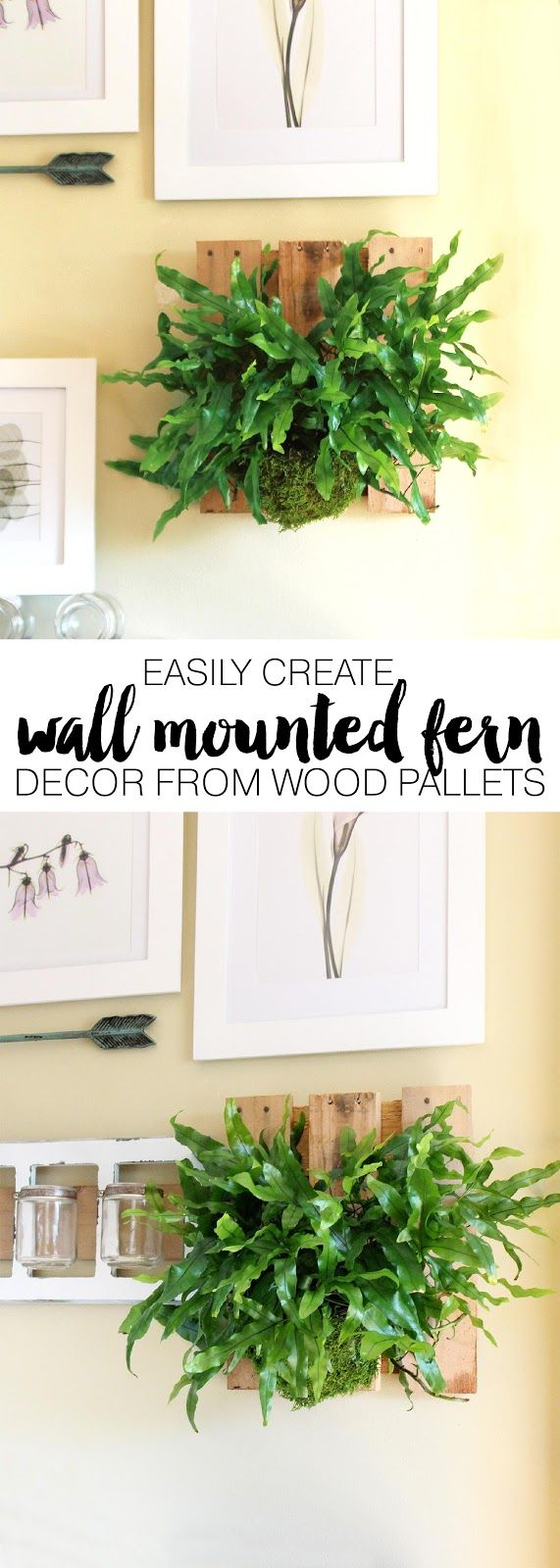 Using a recycled wood pallet to mount a kangaroo paw fern couldn't be easier. I'll show you a simple way to mount a kangaroo or staghorn fern to dress up your wall decor.
