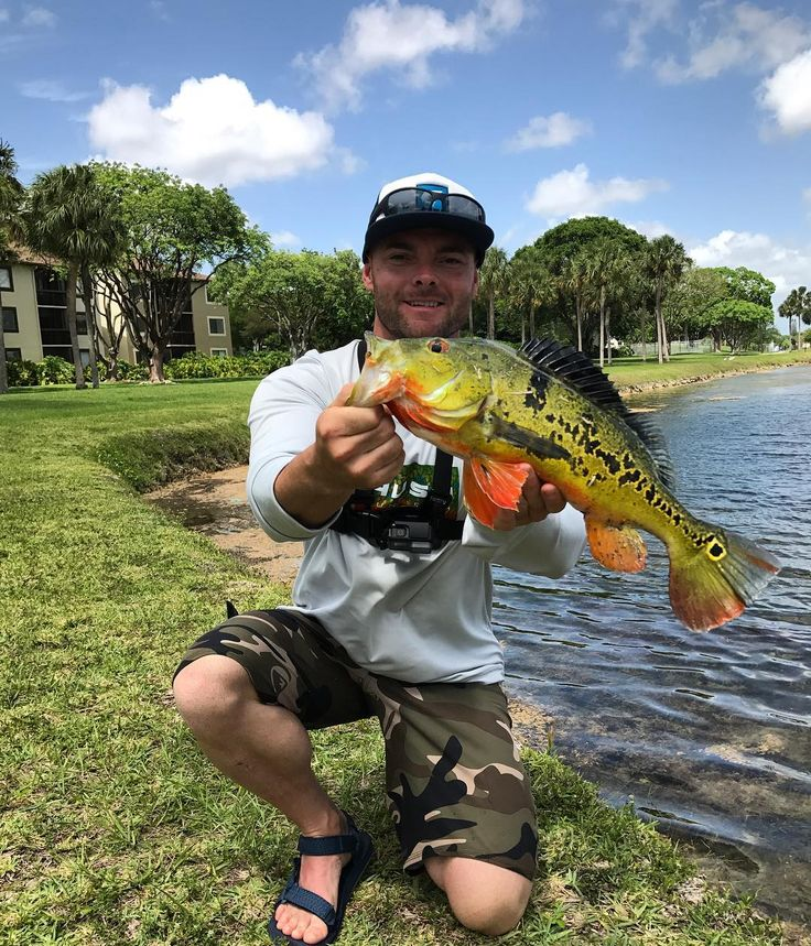 First Peacock Bass Talk About A Beautiful Fish He Put Up Good Fight