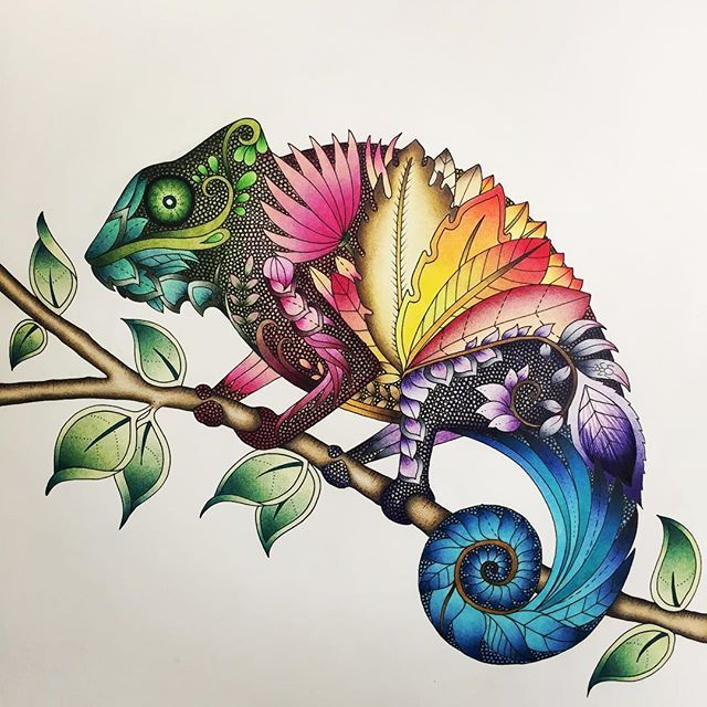 From Johanna Basfords Magical Jungle ColouringColoring BooksAdult