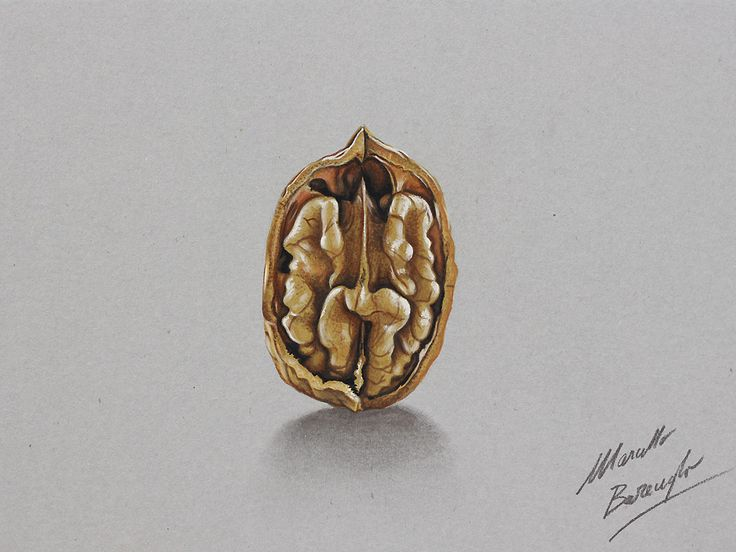 marcello barenghi | Marcello Barenghi: Walnut drawing