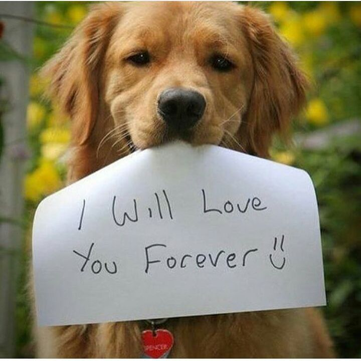 Dog Love Quotes Tumblr