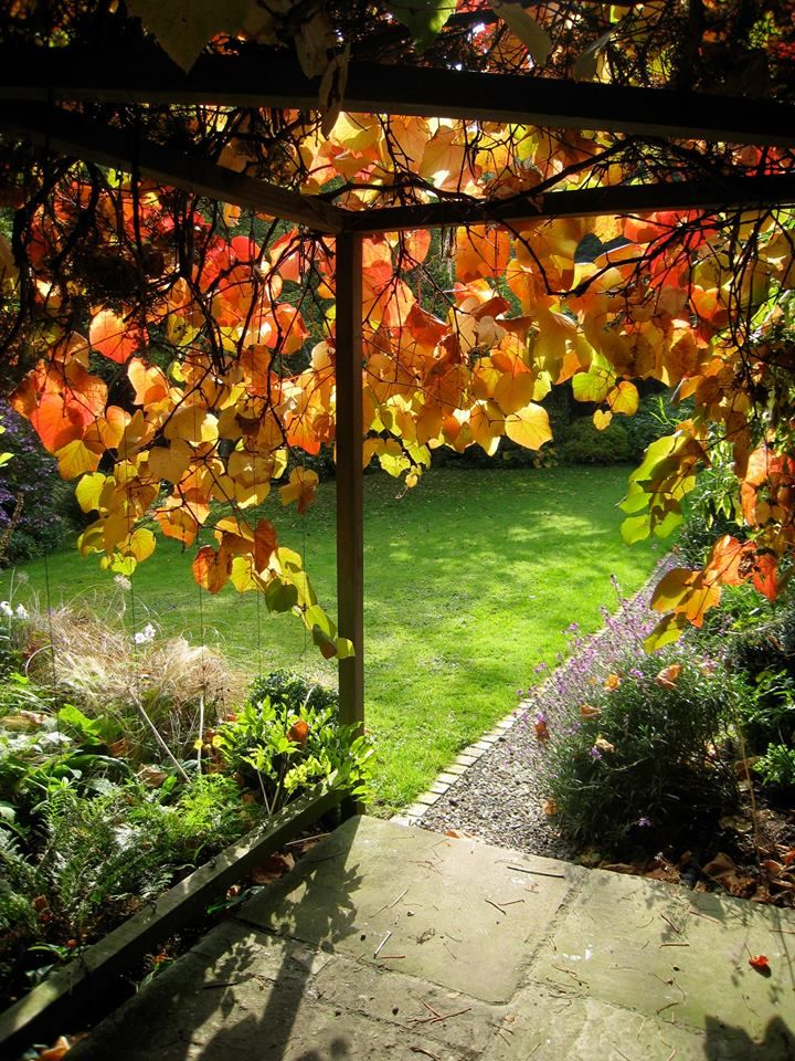Plas Bach, Hay on Wye, Herefordshire. Beautiful Autumn colours at Plas Bach http://www.organicholidays.com/at/2211.htm