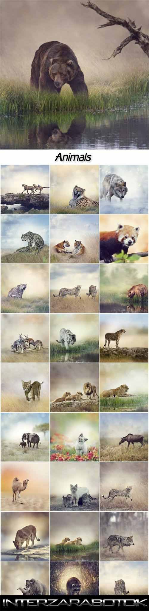 Стоковые фото – Животные, леопард, волк, медведь, слон, верблюд, носороги