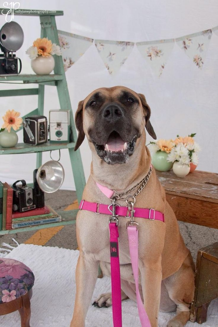 Best Dogs For A  Yr Old Couple To Adopt