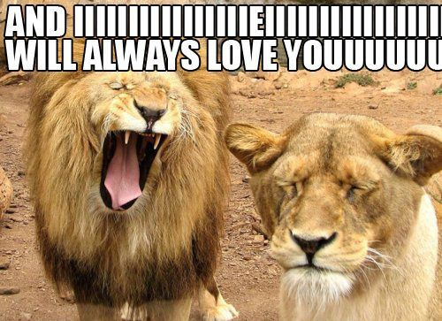 heheh: Lion, Animals, Giggle, Funny Stuff, Humor, Funny Animal, Things, I Will