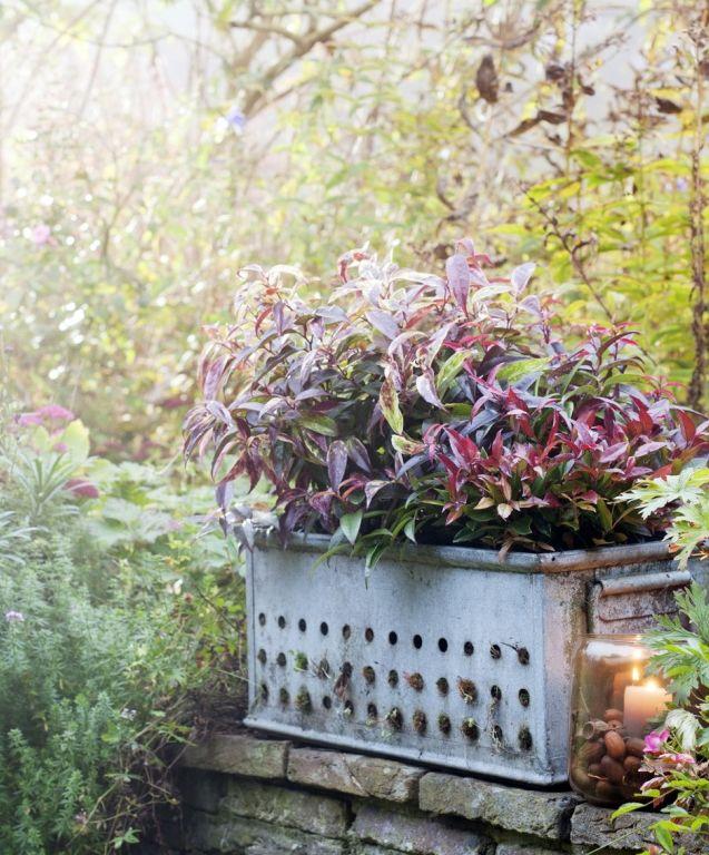 Negen kleurrijke herfst-toppers voor tuin en balkon!