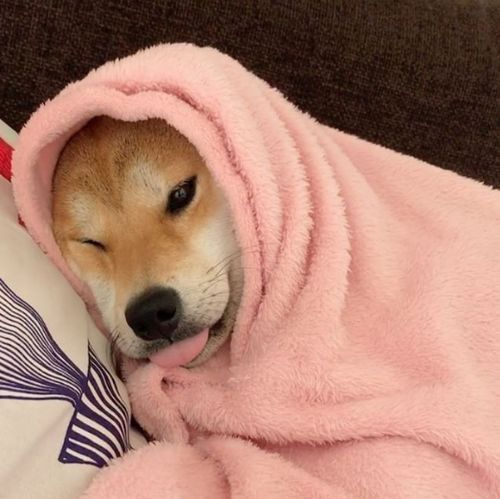 This dog is more aesthetic than me Pinterest // carriefiter