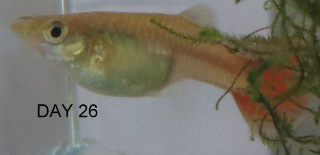 Pin On Fish Breeding